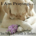 Help my friends in shelters